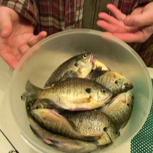A half hour of ice-less ice fishing produced a nice catch of bluegill from a Barry County lake