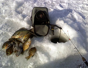 A mess of panfish on ice next to an ice fishing flasher