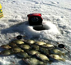 A mess of winter crappie caught through the ice using K&E Stopper Lures inline reels and Whip'r Rods
