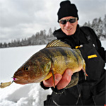 Late Ice Lake St. Clair Jumbo Perch