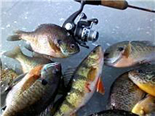 Bill Ferris ices a mess of nice panfish